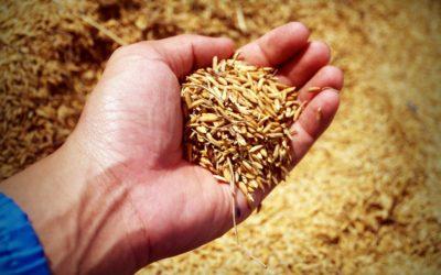 Høstofferaksjon starter 17. september